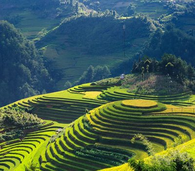 Rice_terrace_Vietnam_2846777_675